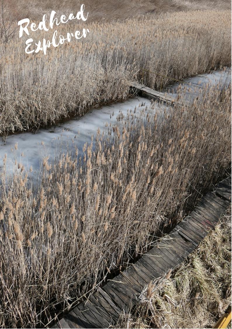 dragoman marsh.jpg