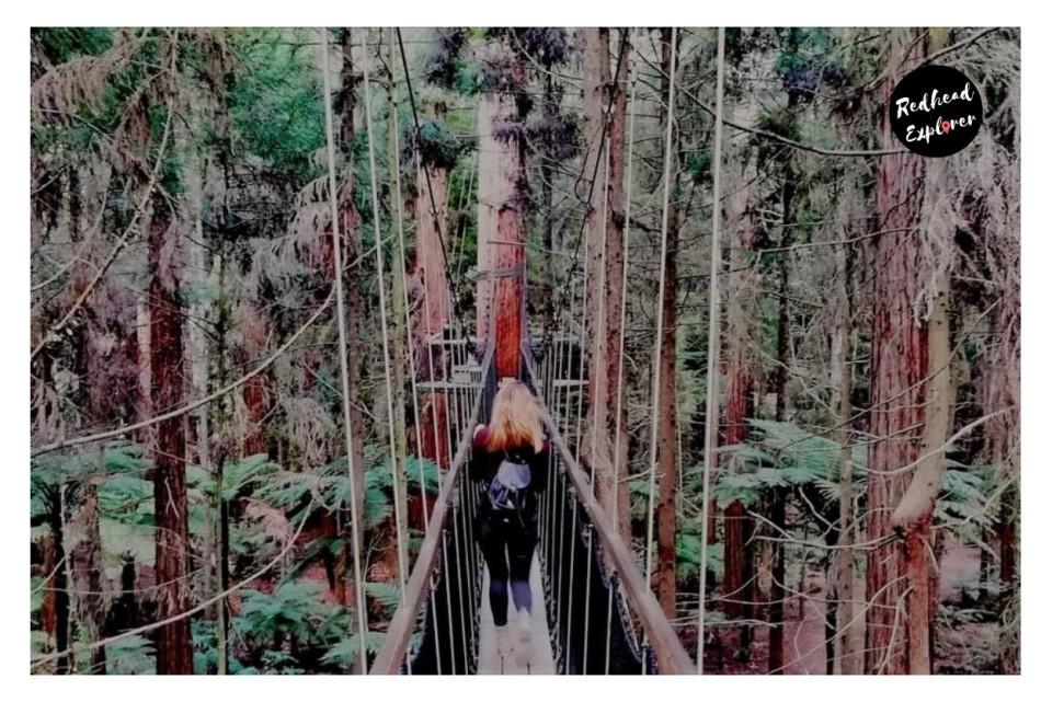 Redhead Explorer Redwoods.jpg